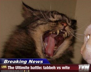 Breaking News - The Ultimite battle: tabbeh vs wite