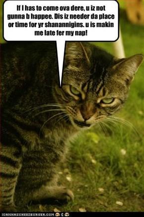 Mom kitteh is upset