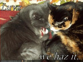 Luvz  we haz it.