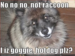 No no no, not raccoon  I iz goggie, hotdog plz?