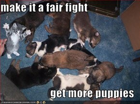 make it a fair fight  get more puppies