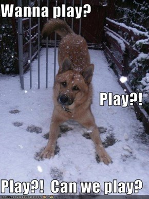 Wanna play? Play?!                  Play?!  Can we play?