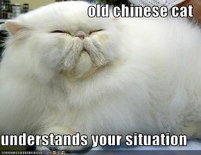 old chinese cat  understands your situation