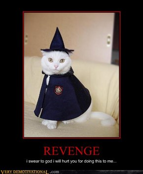 Beware the Wizard Cats