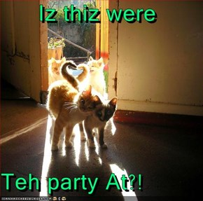 Iz thiz were  Teh party At?!