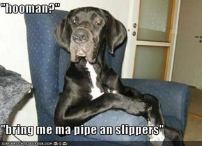 """hooman?""  ""bring me ma pipe an slippers"""