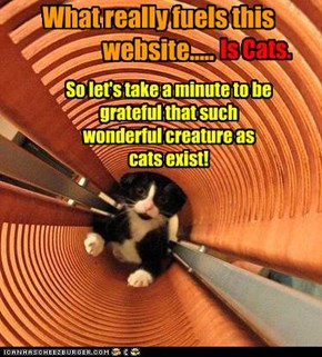 Ever stopped and wantd to thank all the wonderful cats who populate the pictures on this site?