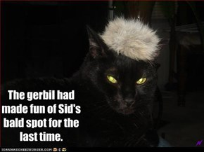 The gerbil had made fun of Sid's bald spot for the last time.