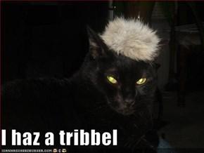 I haz a tribbel