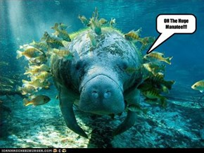 OH The Huge Manatee!!!