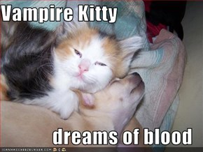 Vampire Kitty  dreams of blood