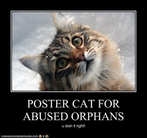 POSTER CAT FOR ABUSED ORPHANS