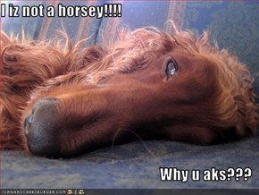 I iz not a horsey!!!!  Why u aks???