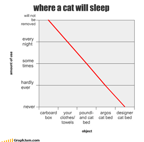 where a cat will sleep