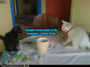 Anudder brawl eruptz at dis mawning's cawfee brake.