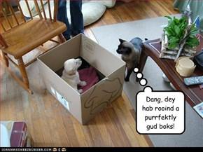 Dang, dey hab rooind a purrfektly gud boks!