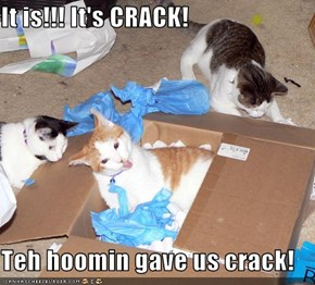 It is!!! It's CRACK!    Teh hoomin gave us crack!