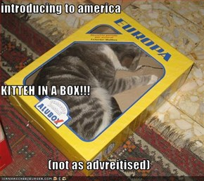introducing to america KITTEH IN A BOX!!! (not as advreitised)