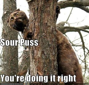 Sour Puss You're doing it right