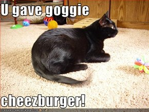 U gave goggie   cheezburger!
