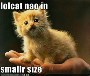 lolcat nao in   smallr size