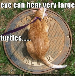 eye can hear very large  turtles......