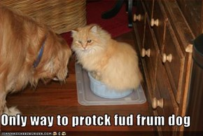 Only way to protck fud frum dog