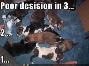 Poor desision in 3... 2... 1...