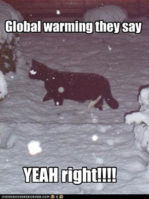 Global warming they say