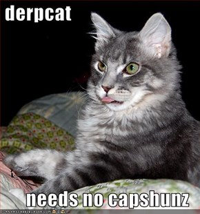 derpcat  needs no capshunz