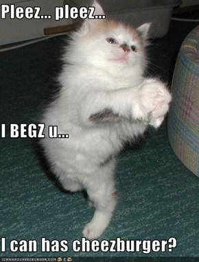 Pleez... pleez... I BEGZ u... I can has cheezburger?