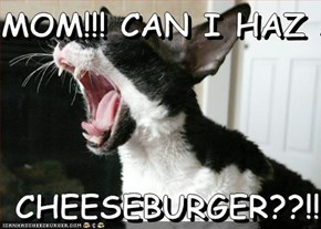 MOM!!! CAN I HAZ A   CHEESEBURGER??!!