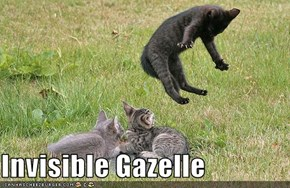 Invisible Gazelle