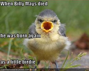 When Billy Mays died he was born again as a little birdie