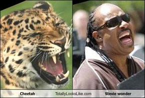 Cheetah Totally Looks Like Stevie wonder