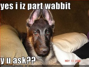 yes i iz part wabbit  y u ask??