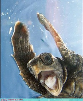 Startled Turtle