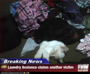 Breaking News - Laundry Avalance claims another victim