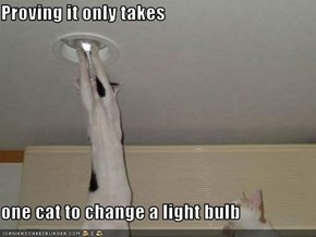 Proving it only takes  one cat to change a light bulb