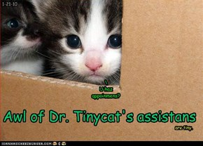 Awl of Dr. Tinycat's assistans