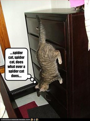 ....spider cat, spider cat, does what ever a spider cat does....