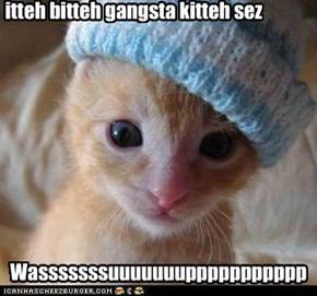 Itteh Bitteh Gangsta Kitteh