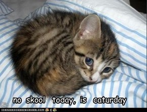 no  skool   today,  is   caturday