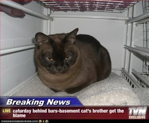 Breaking News - caturday behind bars-basement cat's brother get the blame
