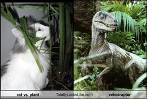 cat vs. plant Totally Looks Like velociraptor