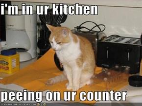 i'm in ur kitchen  peeing on ur counter