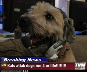 Breaking News - Kats attak dogs run 4 ur life!!!!!!!!