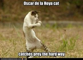 Oscar de la Hoya cat