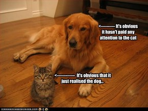 <-------------  It's obvious that it just realised the dog...