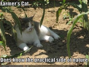 Farmer's Cat   Does know the practical side of nature